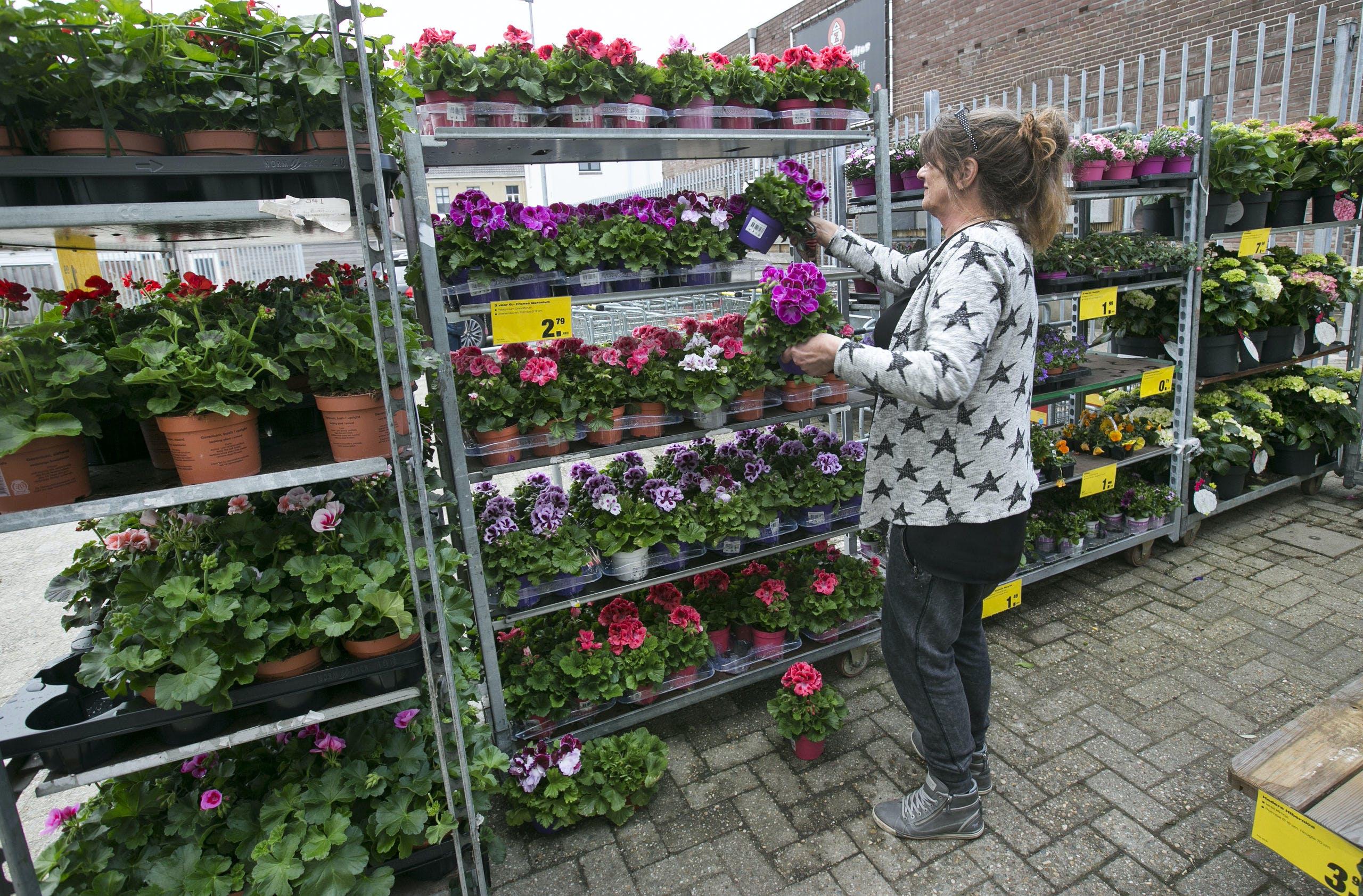 Plantjesmarkt bij Praxis in Arnhem. Bouwmarkten zagen hun omzet stijgen vorig jaar.