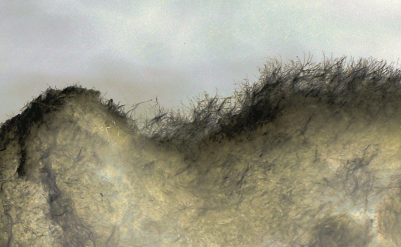 Microlandschap #2, Anne Geene, 2012.