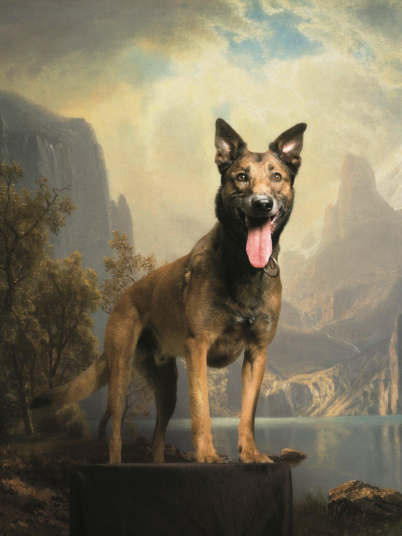 De Mechelse herder is een Belgische herder vernoemd naar de stad Mechelen. Opvallend: oorspronkelijk komt hij uit de Kempen.
