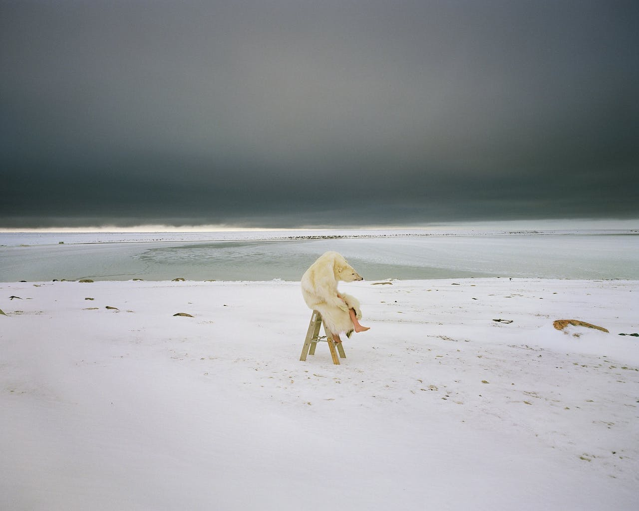 Polar Bear, 2007, Scarlett Hooft Graafland.