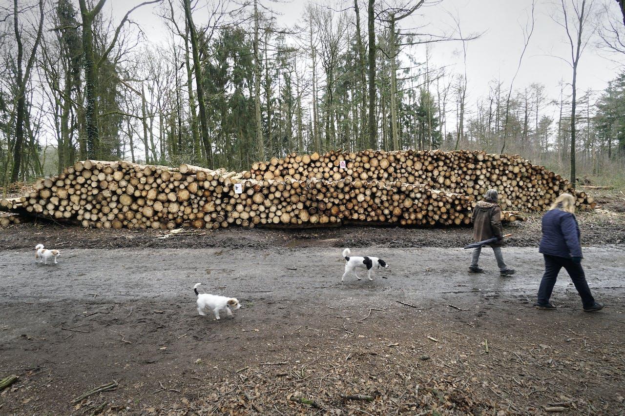 Het verbranden van hout om daarmee elektriciteit te produceren, is omstreden.