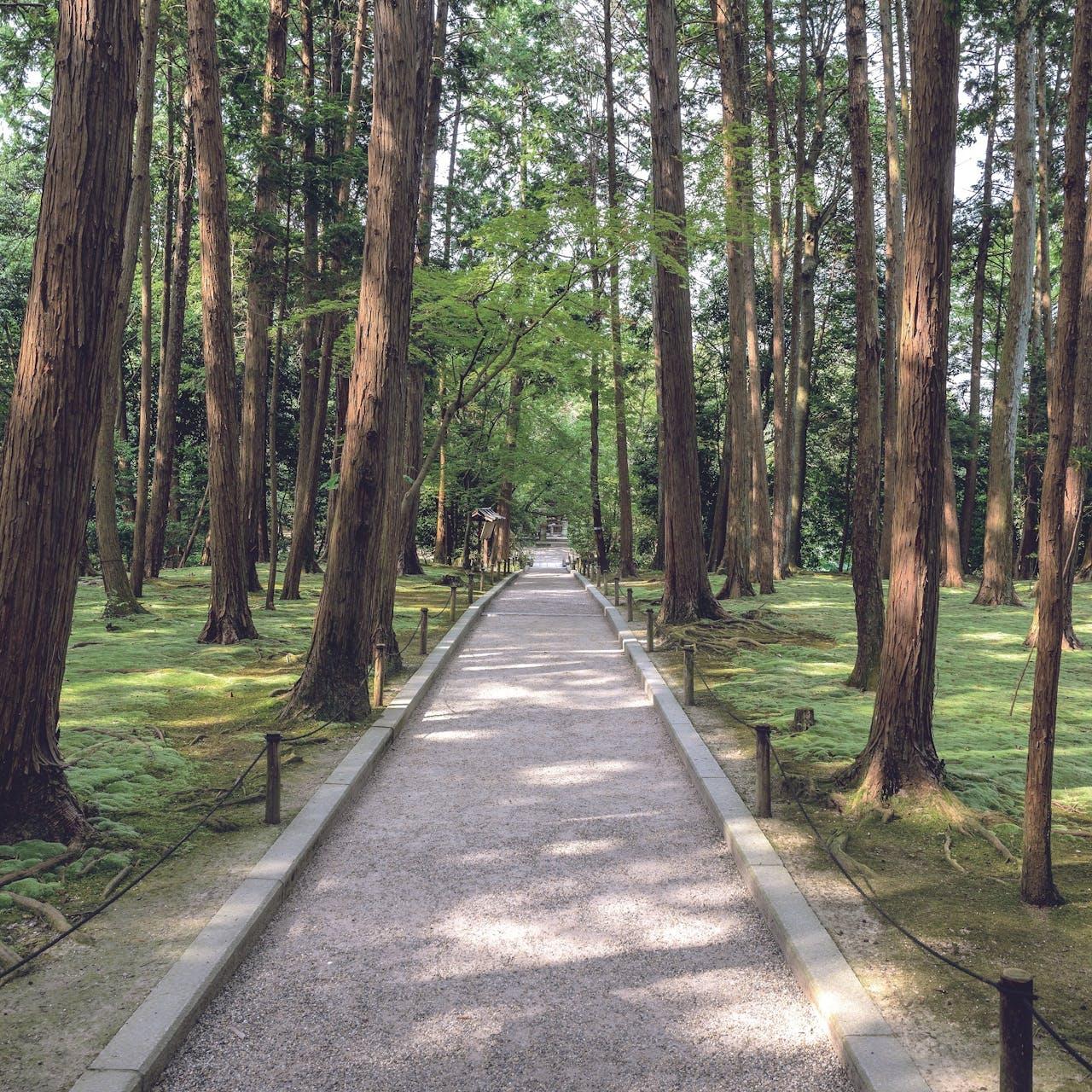 In Koyasan ligt Japans grootste begraafplaats, een sprookjesachtige plek omgeven door hoge ceders.