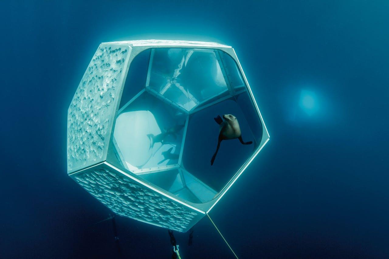 De wanden van de paviljoenen spiegelen het leven in de oceaan en laten zo de rijkdom ervan zien.