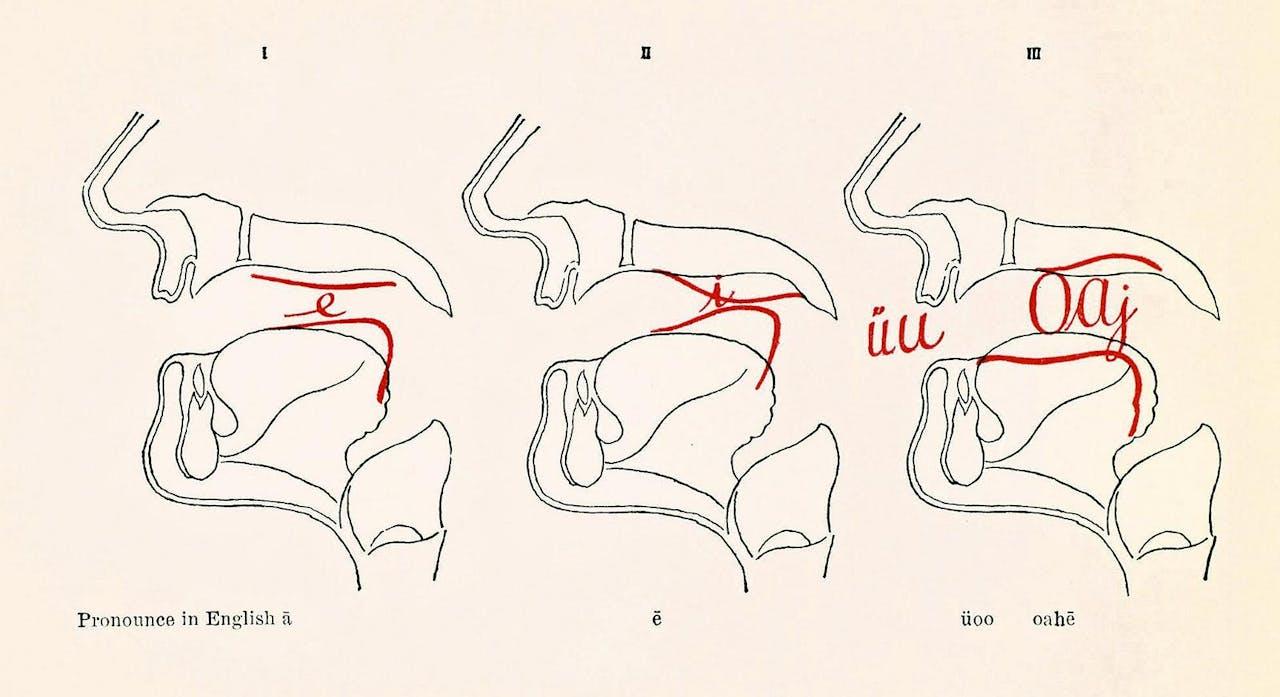 Het geluid dat door het samenknijpen van de stembanden ontstaat, wordt door lippen, keel, tong en gehemelte omgezet in een klank.