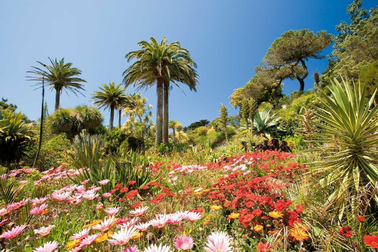 The Abbey Garden op het eiland Tresco.