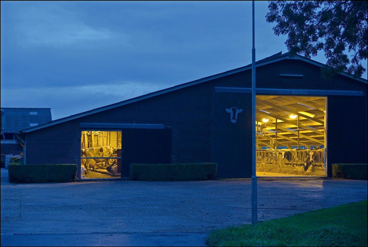 De provincie Friesland profiteert sterk van de zuivelhausse. Producenten willen dicht bij de melkveehouders zitten. Foto: Hollandse Hoogte/Flip Franssen