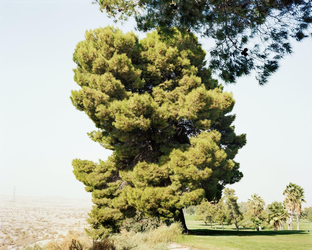 'Edges of the Experiment   Taft (CA)', 2008. De water-rekening van het golfterrein rechts loopt jaarlijks in de tonnen.