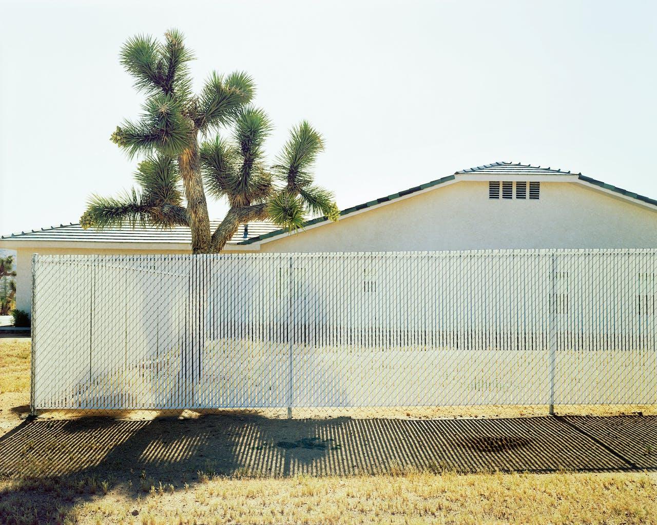 'Joshua Tree #1 (CA)', 2002. De inheemse boom dankt zijn naam aan de mormonen, die vonden dat hij lijkt op de profeet die met zijn armen naar de hemel reikt.