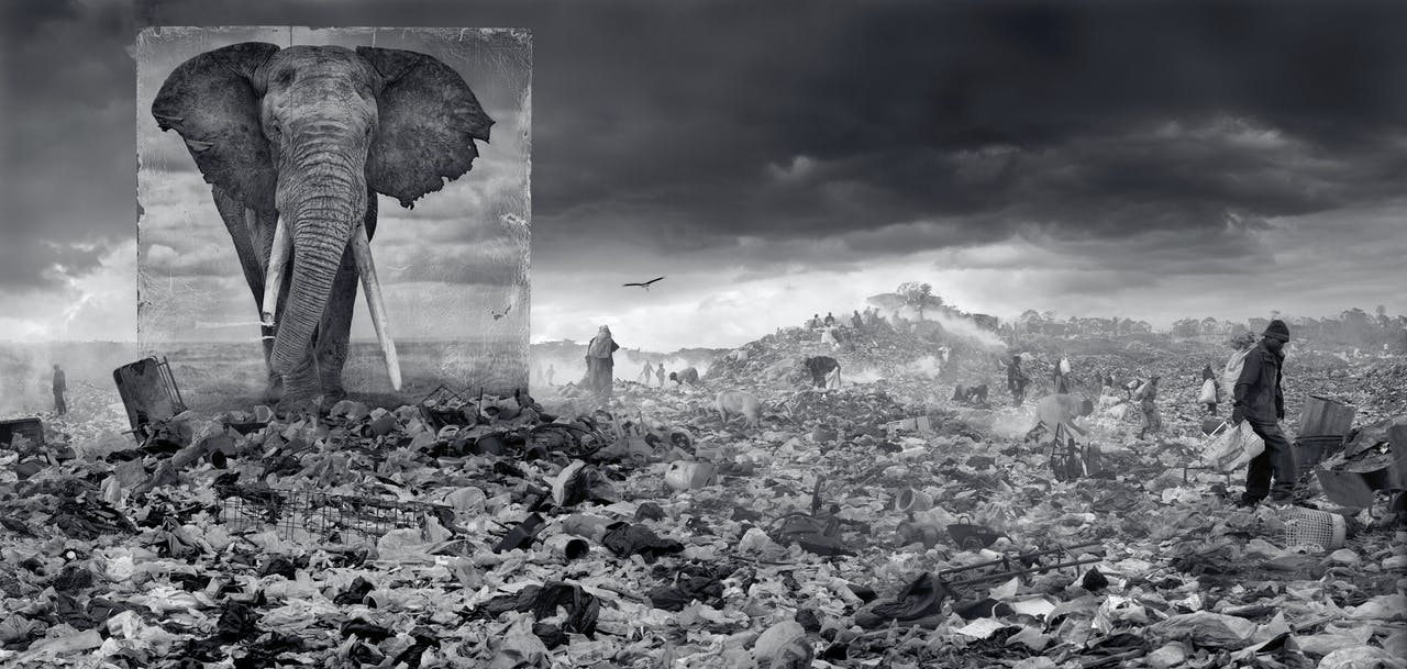 'Dumpplaats met olifant', 2015.