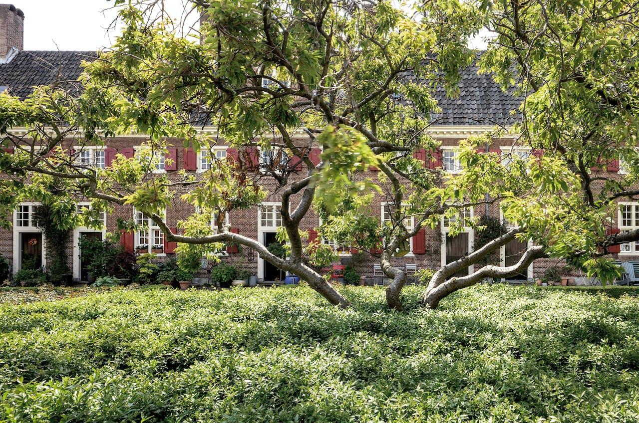 De tuin van Het Hofje van Nieuwkoop in Den Haag (1661).
