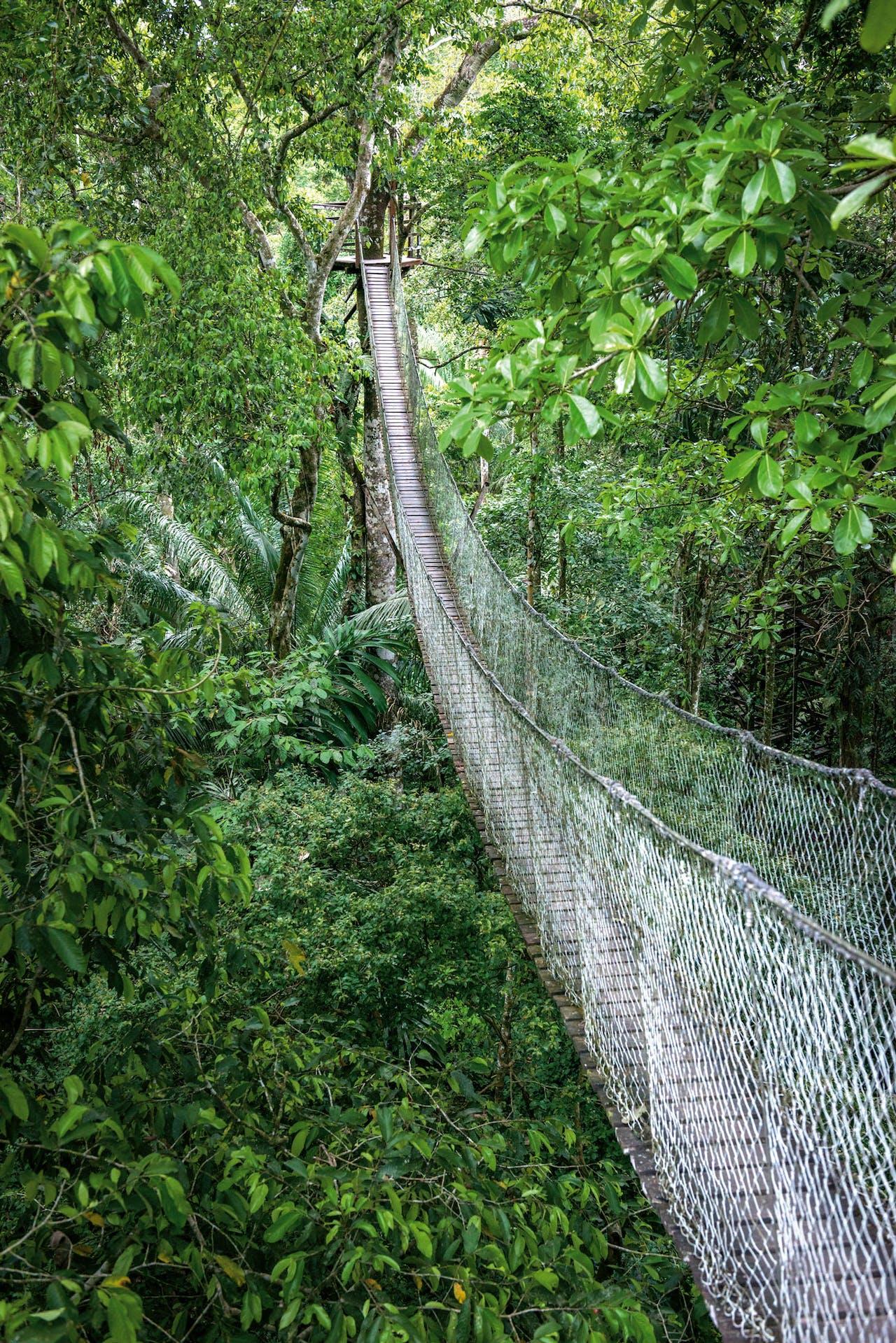 De Canopy-brug hangt maar liefst dertig meter boven de grond.