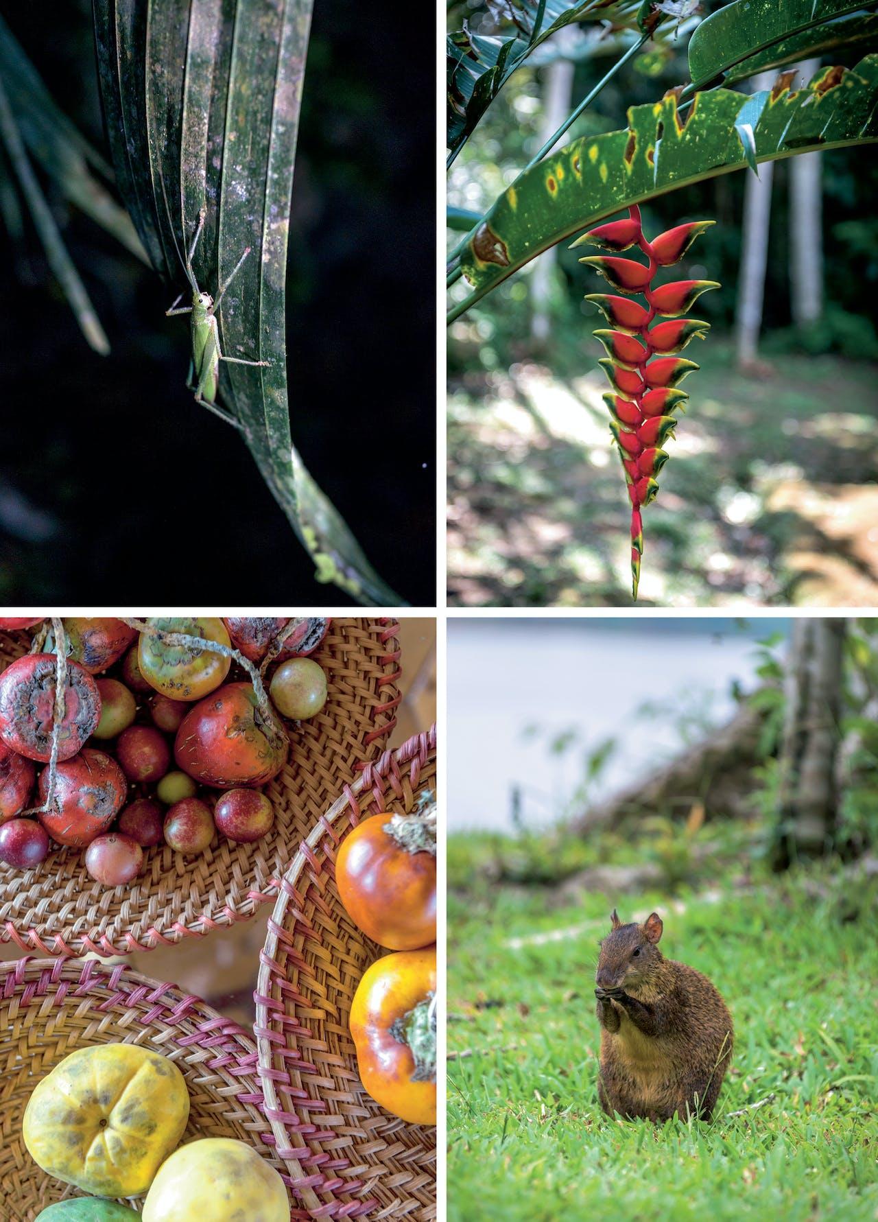 Exotische flora en fauna van de Peruaanse Amazone.