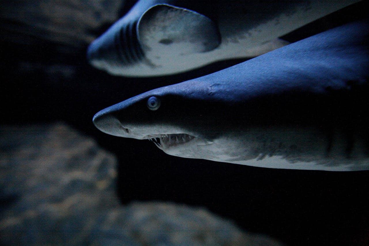 Een haai. Wordt overigens niet grootschalig bevist in Britse wateren.