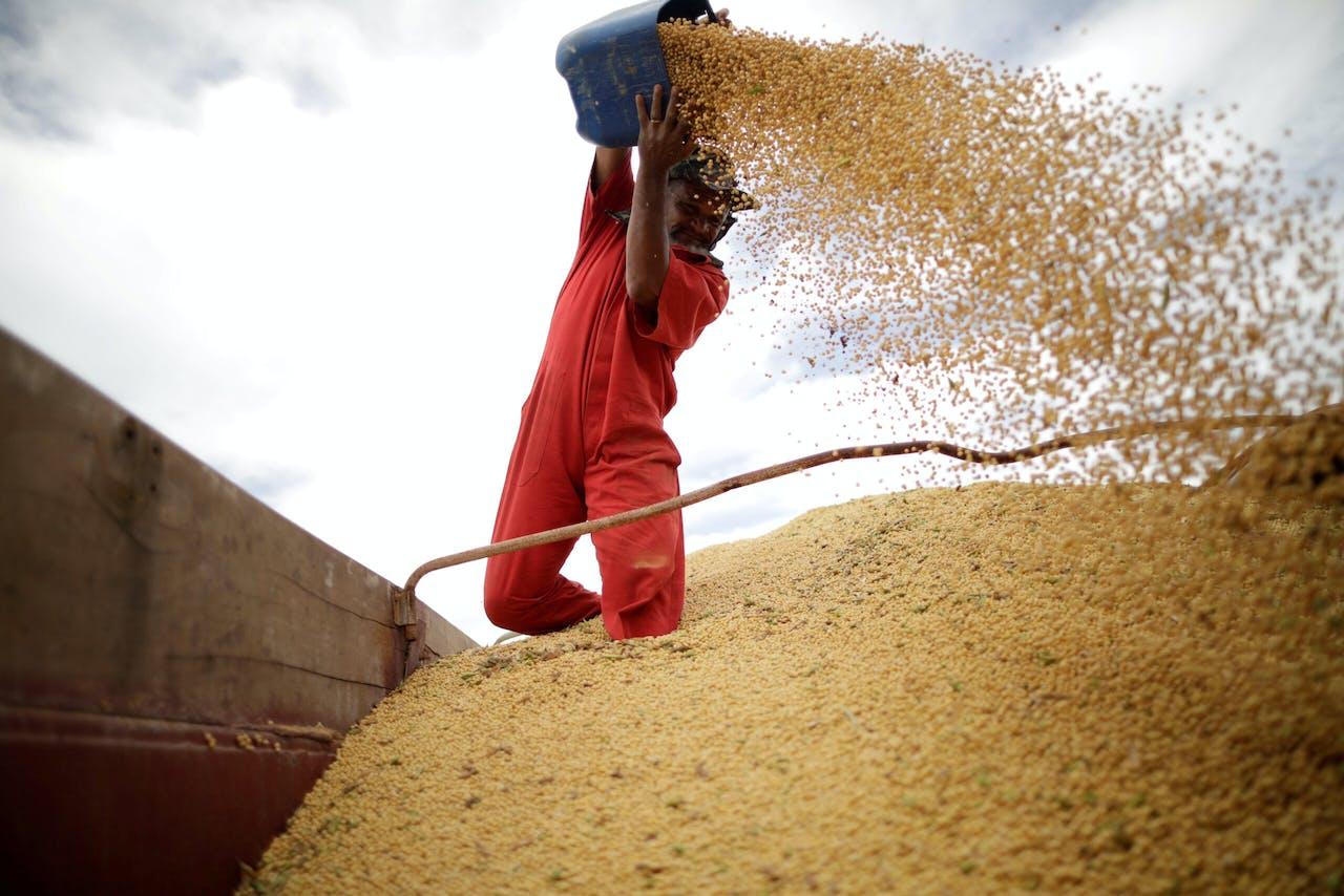Inspectie van sojabonen tijdens de oogst, in Brazilië.