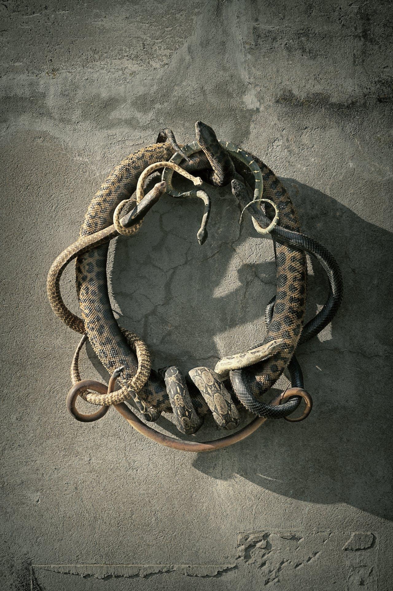 'Snake Heraldry', 2015, voor de expositie geleend van Damien Hirst, is een compositie van de zeven dodelijkste slangen ter wereld.