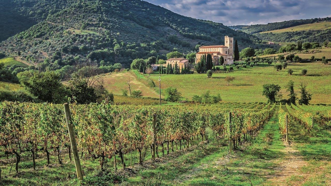 Wijngaarden rond het dorpje Montalcino.