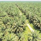Is er nog een toekomst voor palmolie?